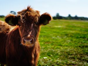 What is Pastoral Farming?